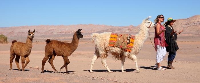 Atacama caravana ancestral